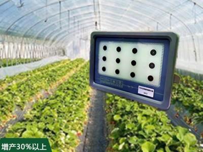 草莓专用补光灯
