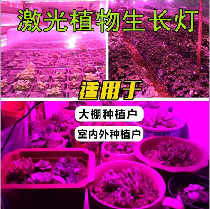 激光大棚补光灯价格/植物补光灯有用吗 植物生长灯厂家直销