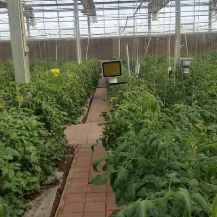 西红柿补光灯 植物补光灯